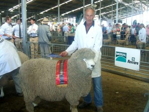 Champion 2010 BNZ Supreme Champion Wool Animal - Strathblane 511/07, Christchurch: Supreme Champion Wool Breeds Sheep; Supreme Champion Corriedale Ram; Killik Aike Trophy Best Sires Fleece